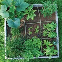 Un orto sul terrazzo idea per la primavera