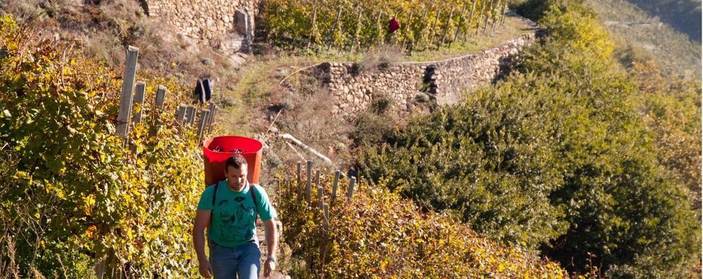 I muretti a secco riconosciuti come Patrimonio immateriale dell'umanità
