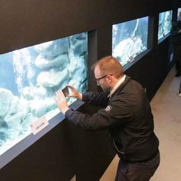 I pesci d'acqua dolce hanno trovato casa  Ecco il loro acquario
