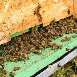 Freddo e pioggia, apicoltori in ginocchio