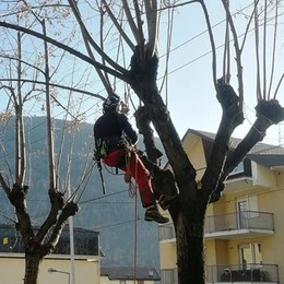Treeclimbing, settanta alberi potati con cura a Tirano
