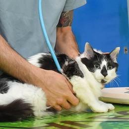 Gatti e microchip è scattato l'obbligo. «Ma è anche utile»