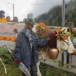 Festa degli alpeggi  La mucca Gelsomina   vince il titolo di miss